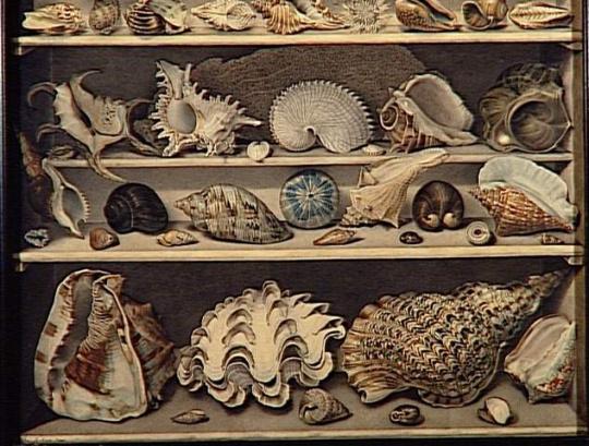 alexandre isidore leroy de barde choix de coquillages images d art. Black Bedroom Furniture Sets. Home Design Ideas